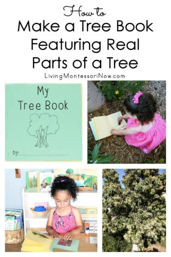 How to Make a Tree Book Featuring Real Parts of a Tree