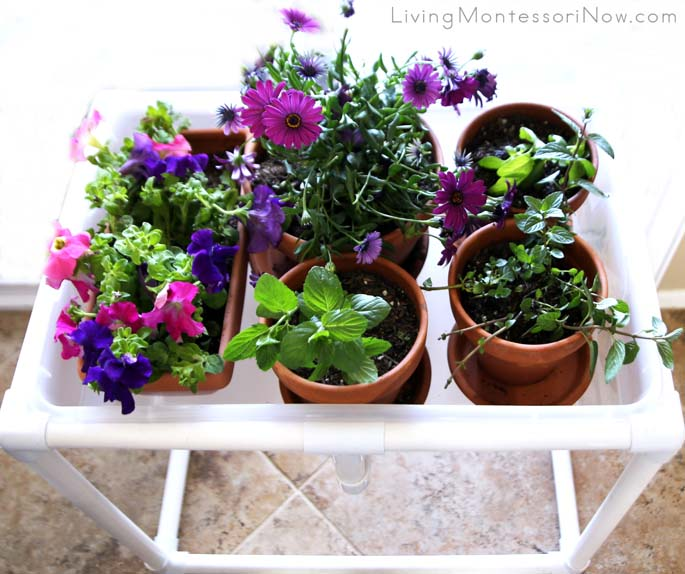 Montessori Gardening in a DIY Sensory Table