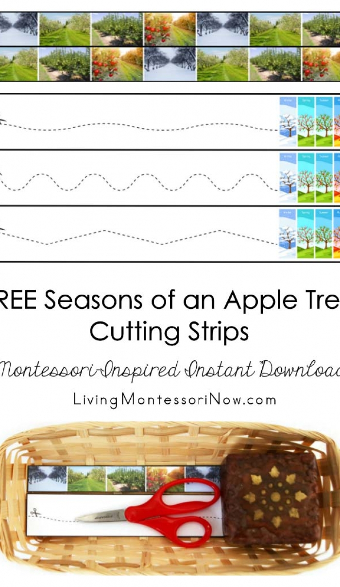 FREE Seasons of an Apple Tree Cutting Strips (Montessori-Inspired Instant Download)
