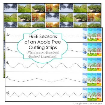 FREE Seasons of an Apple Tree Cutting Strips