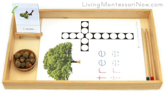 Tree Do-a-Dot Letter T Tray with Acorns and Oak Tree Life Cycle Booklet