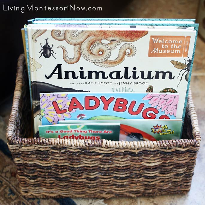 Montessori Book Basket with Books for a Ladybug Unit