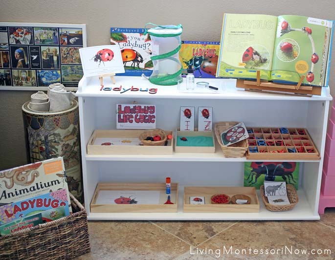 Montessori Shelves and Book Basket with Ladybug-Themed Books and Activities