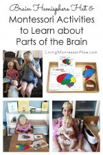 Brain Hemisphere Hat and Montessori Activities to Learn about Parts of the Brain