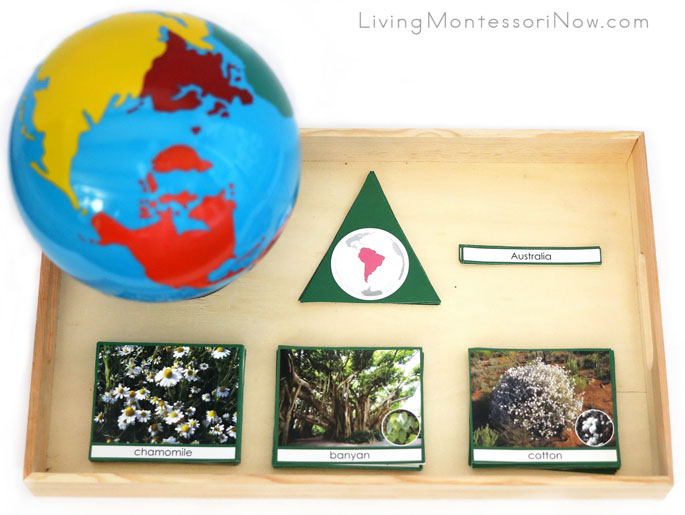 Montessori Tray with Materials for Various Plants, Trees, and Bushes of the Continents Circles