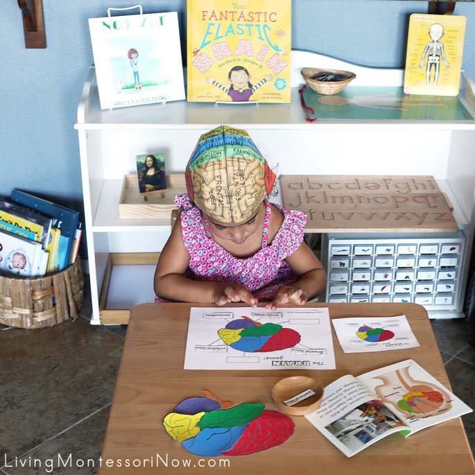 image regarding Brain Hat Printable identify Mind Hemisphere Hat and Montessori Actions in the direction of Find out