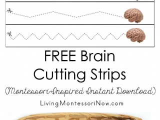 FREE Brain Cutting Strips (Montessori-Inspired Instant Download)