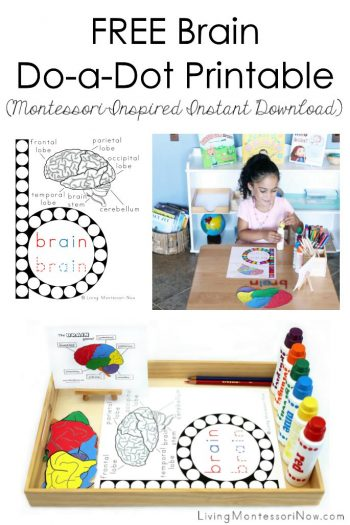 Free Brain Do-a-Dot Printable