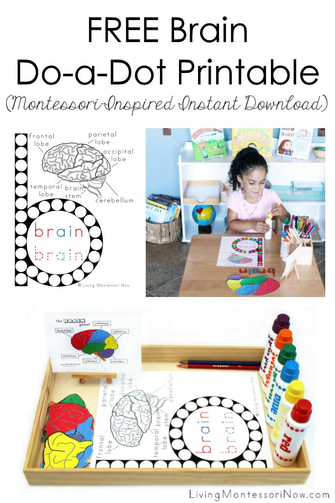 FREE Brain Do-a-Dot Printable (Montessori-Inspired Instant Download)