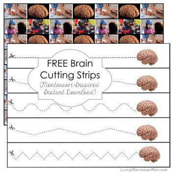 Free Brain Cutting Strips