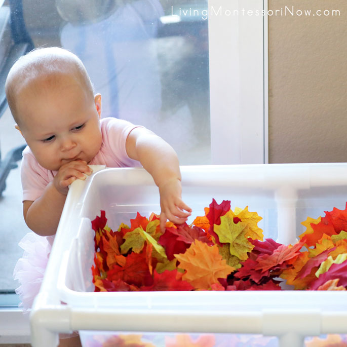 At 10 Months, Having Fun with Fall Leaf Sensory Bin Containing Washed Silk Leaves