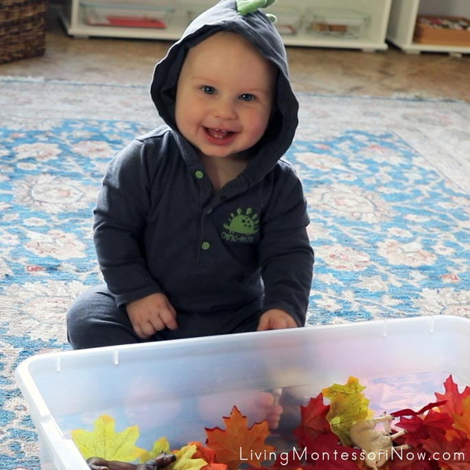 At 7 Months Old, Loving the Fall Leaf Sensory Bin Containing Washed Silk Leaves and Farm Animals