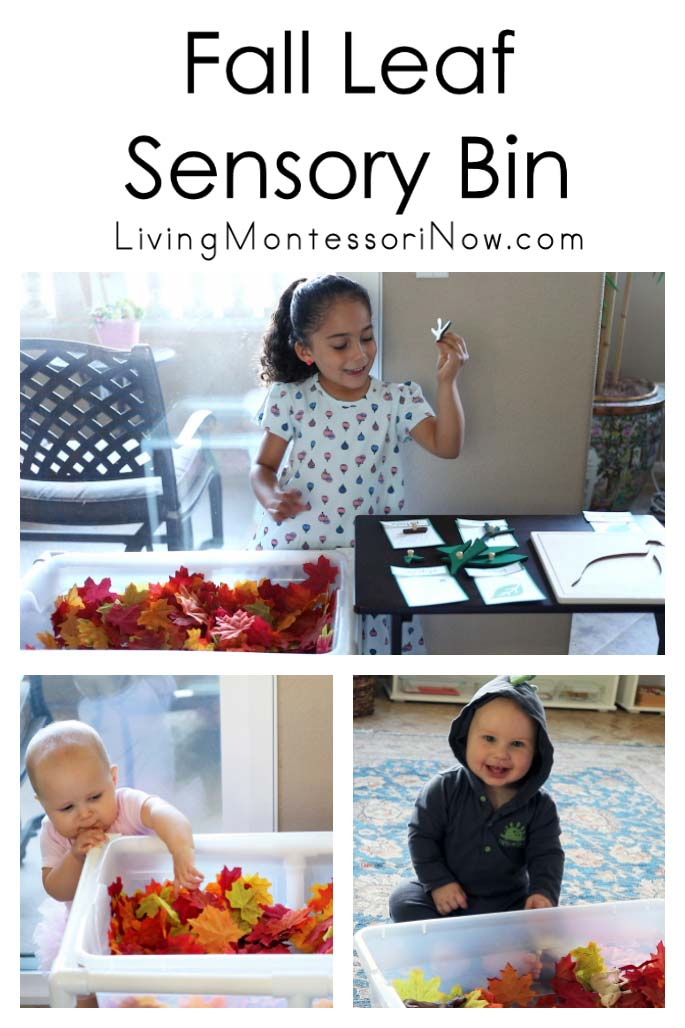 Fall Leaf Sensory Bin with Parts of a Leaf Scavenger Hunt and Activities for Babies and Toddlers