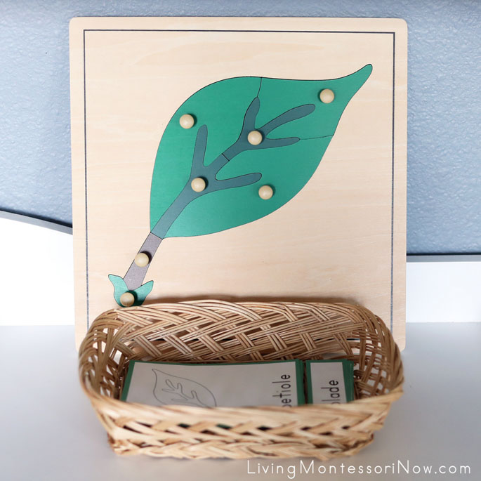 Montessori Leaf Puzzle with Parts of a Leaf Cards