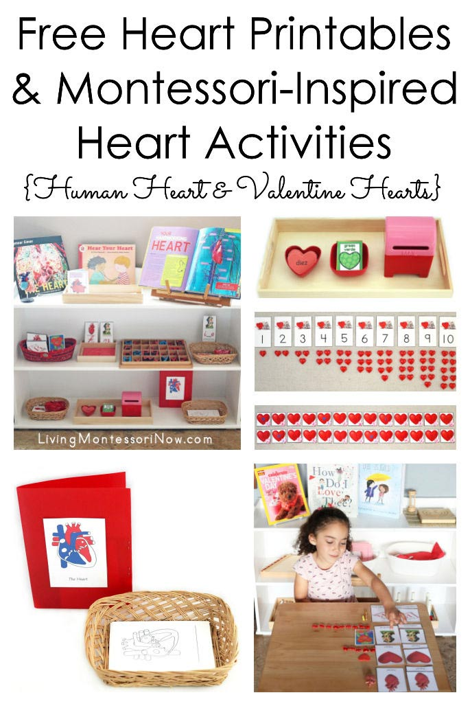 Free Heart Printables and Montessori-Inspired Heart Activities {Human Heart and Valentine Heart}