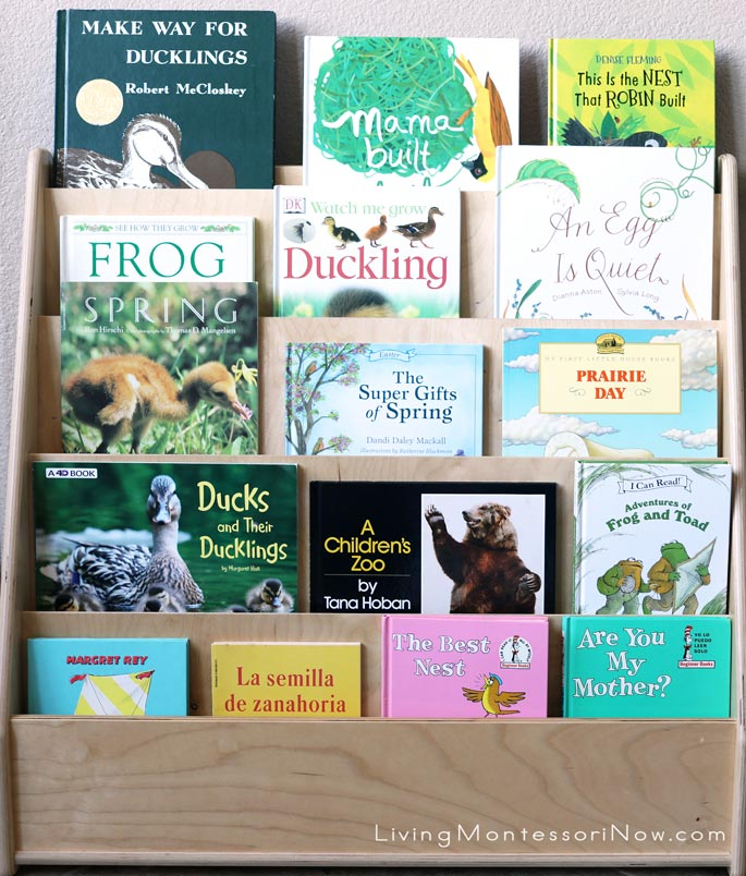 Front-Facing Bookshelves with Books for a Mini Spring Unit