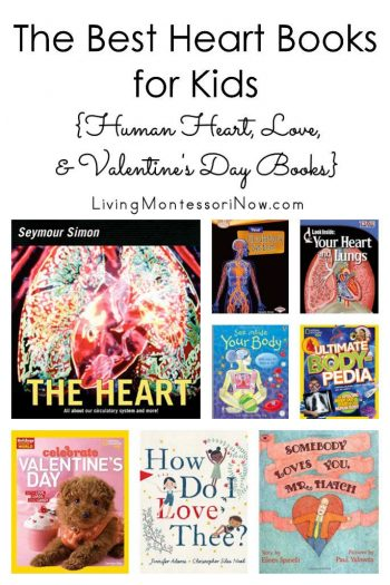 The Best Heart Books for Kids
