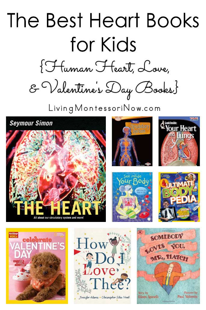 The Best Heart Books for Kids {Human Heart, Love, and Valentine's Day Books}
