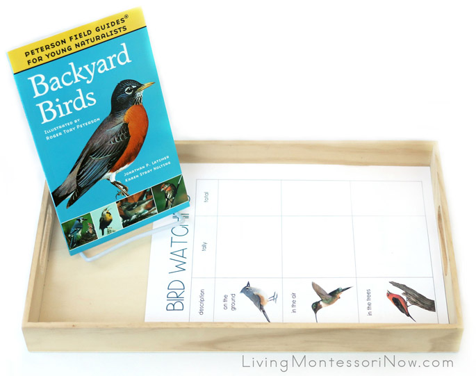 Backyard Bird Watching Tray