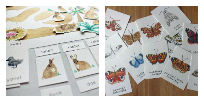 Bunny Burrows Nature Study Pack and Butterfly and Moth Flash Cards