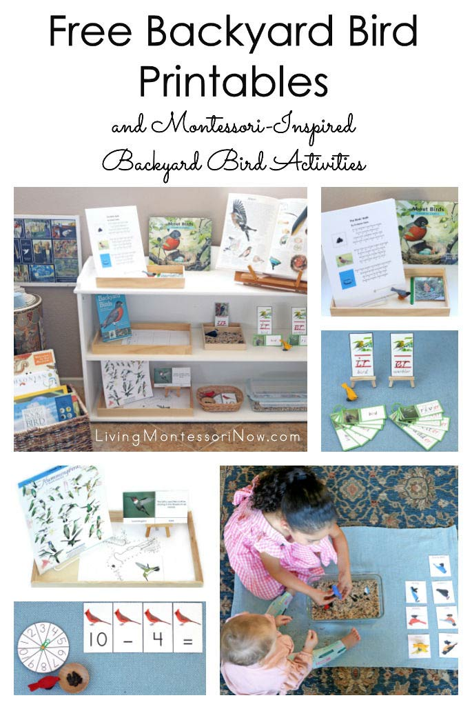 Free Backyard Bird Printables and Montessori-Inspired Backyard Bird Activities