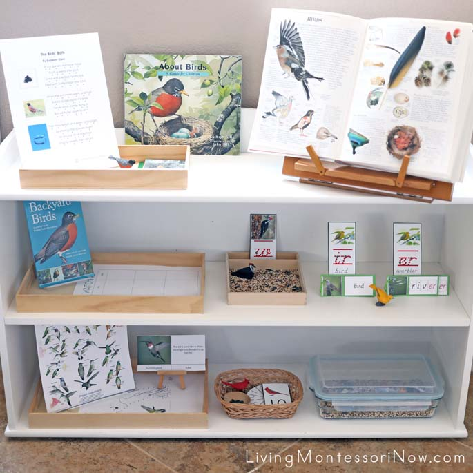 Montessori Shelves with Backyard Bird Themed Activities