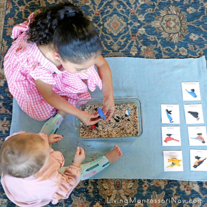 Working with Birdseed Sensory Bin and Types of Backyard Birds