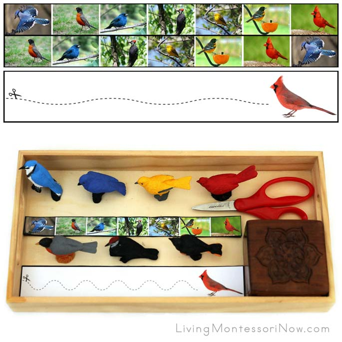 Backyard Bird Cutting Strips with Tray and Safari Ltd Figures