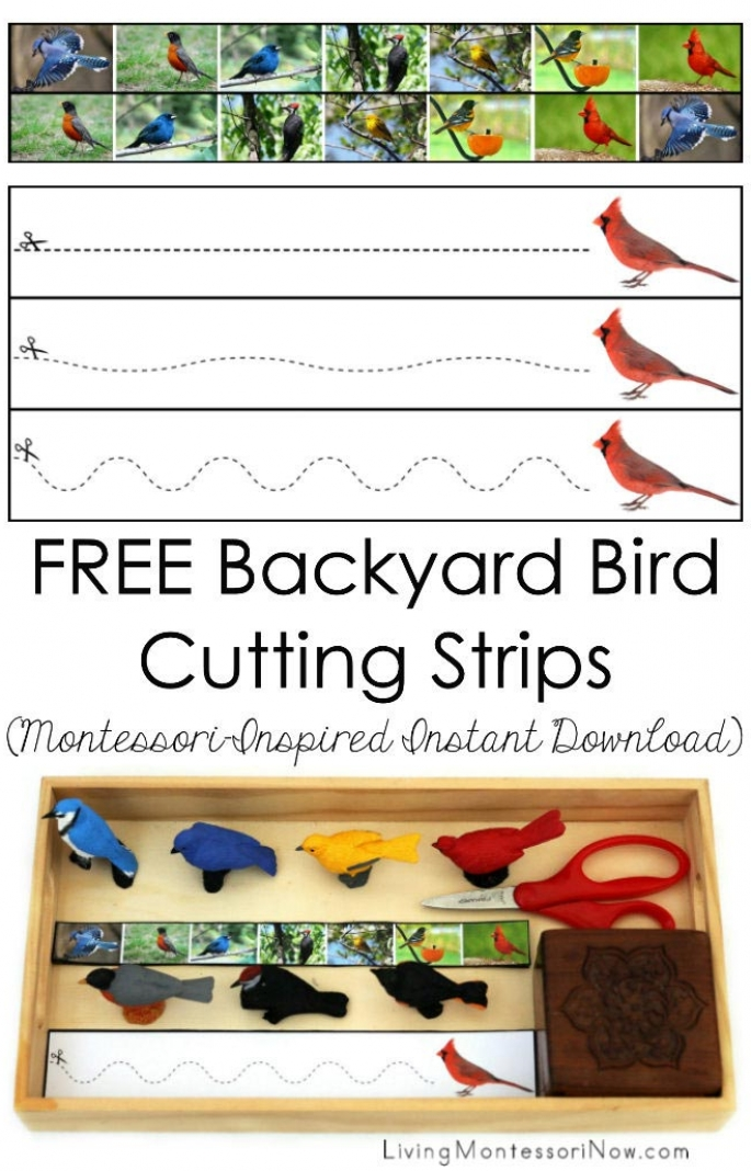 FREE Backyard Bird Cutting Strips (Montessori-Inspired Instant Download)