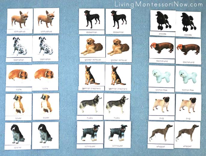 Layout for Dogs Classified Cards
