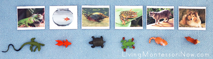 Pets Picture Cards with Safari Ltd Figures from Pets TOOB