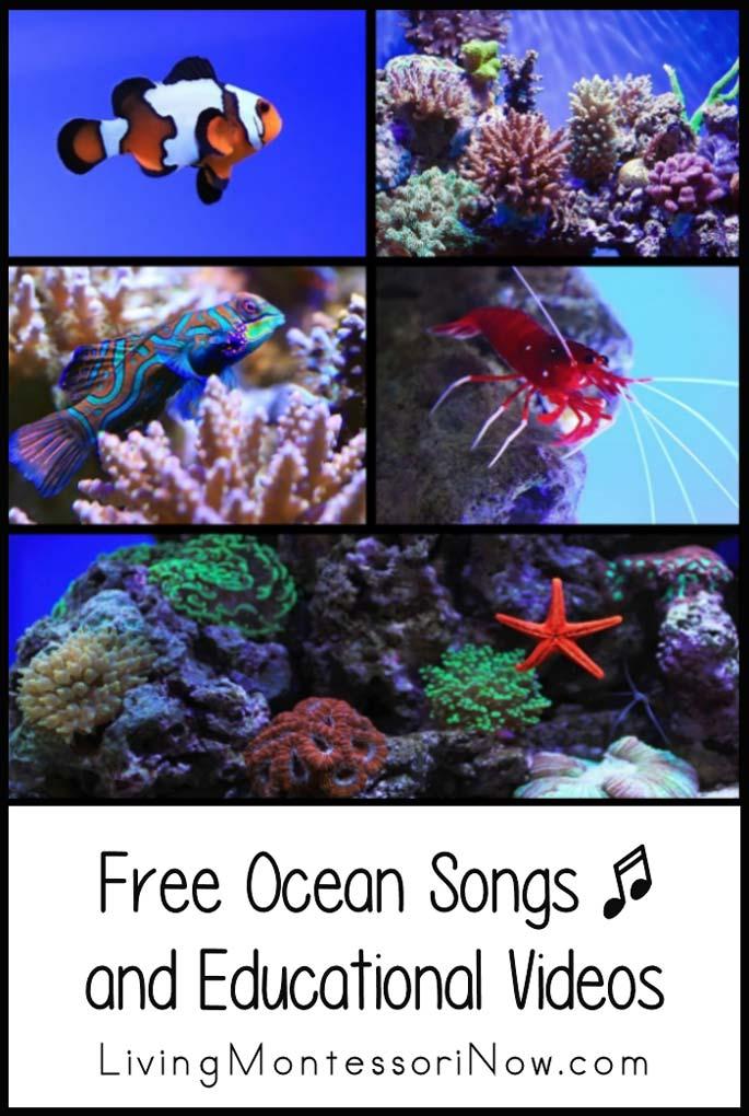 Free Ocean Songs and Educational Videos