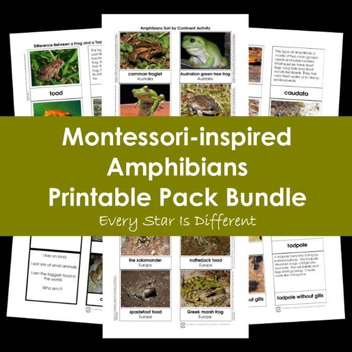 Montessori-Inspired Amphibians Printable Pack Bundle from Every Star Is Different