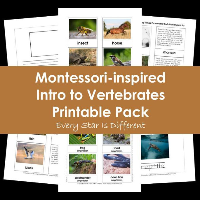 Montessori-Inspired Intro to Vertebrates Printable Pack from Every Star Is Different