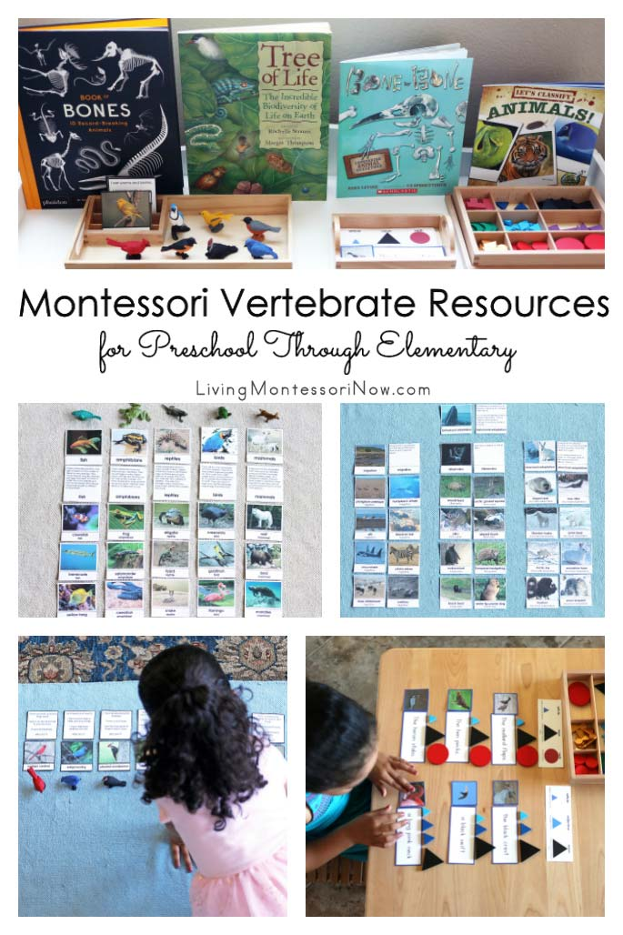 Montessori Vertebrate Resources for Preschool Through Elementary
