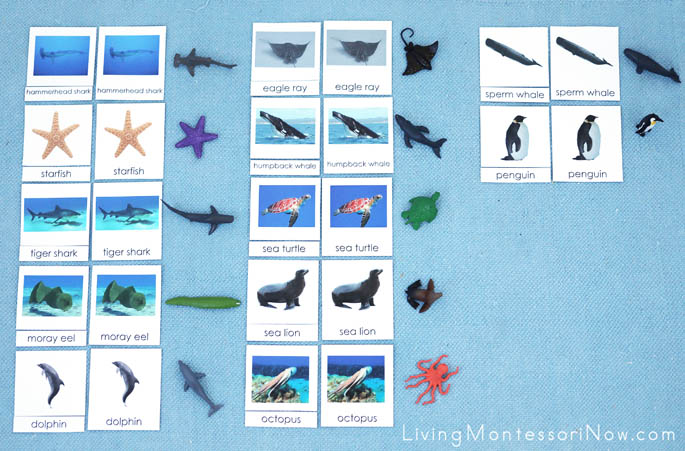 Ocean Animal 3-Part Cards with Safari Ltd Ocean TOOB Animals