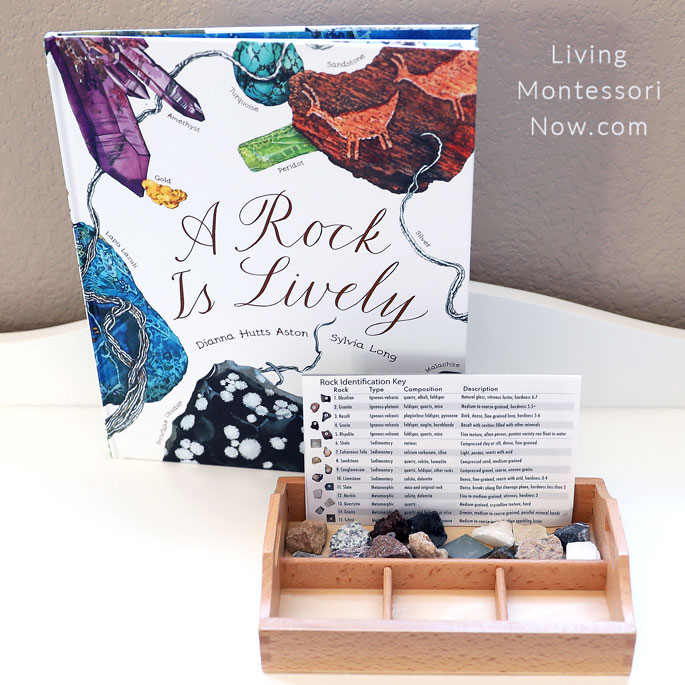 A Rock Is Lively Book with Igneous, Sedimentary, and Metamorphic Rock Sorting