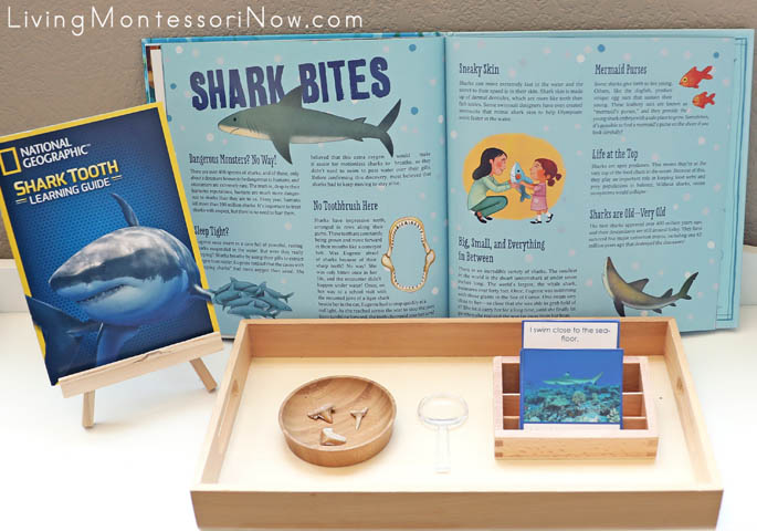 Excavated Shark Teeth with Shark Reference Materials and Who Am I? Shark Cards