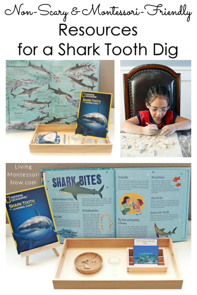 Non-Scary and Montessori-Friendly Resources for a Shark Tooth Dig