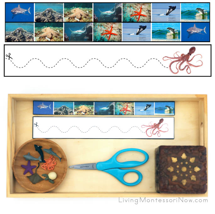 Ocean Animal Cutting Strips with Tray and Safari Ltd Good Luck Mini Ocean Animals