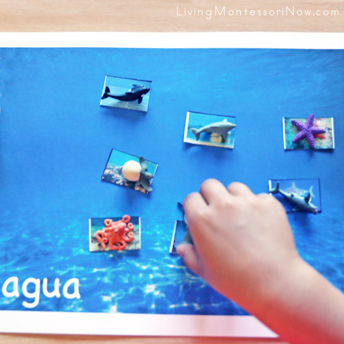 Spanish Water Mat with Ocean Animal Cut-and-Paste and Mini Ocean Animal Matching