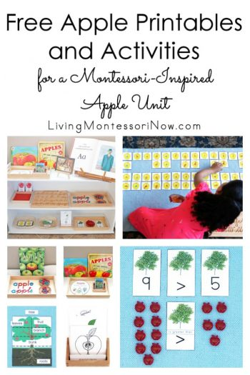 Free Apple Printables and Activities for a Montessori-Inspired Apple Unit