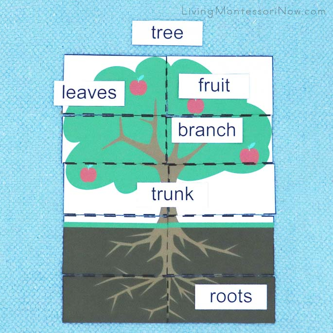 Parts of an Apple Tree Puzzle and Labels