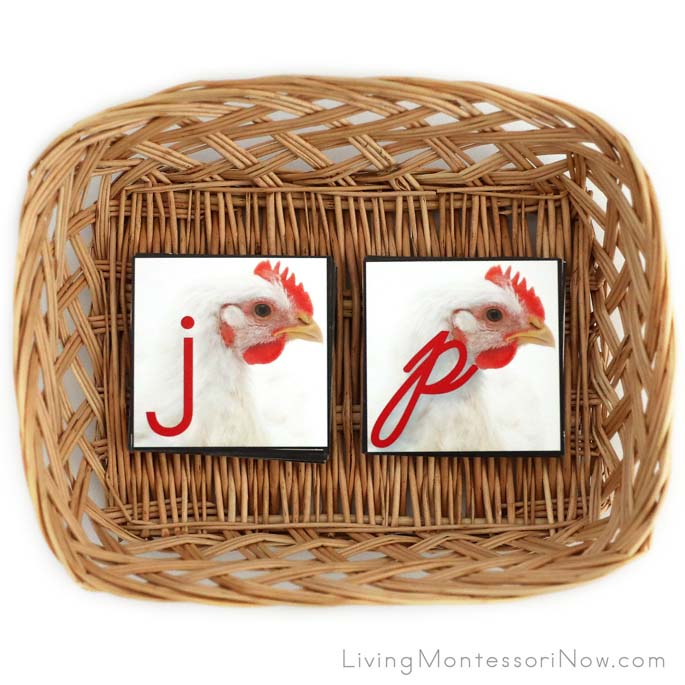 Chicken Movable Alphabet or Matching Alphabet Cards in Manuscript and Cursive