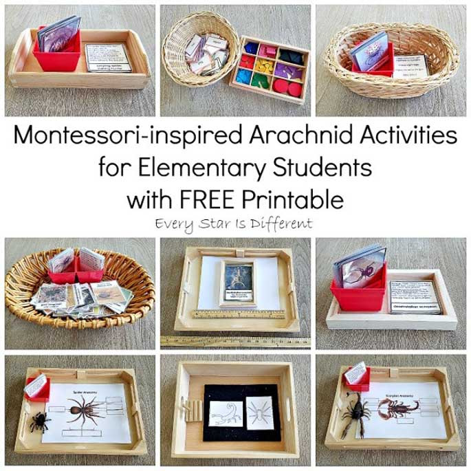 Montessori-Inspired Arachnid Activities for Elementary Students with Free Printable from Elementary Star Is Different