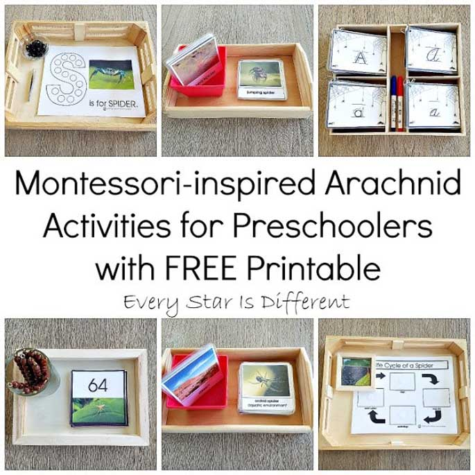 Montessori-Inspired Arachnid Activities for Preschoolers with Free Printable from Every Star Is Different