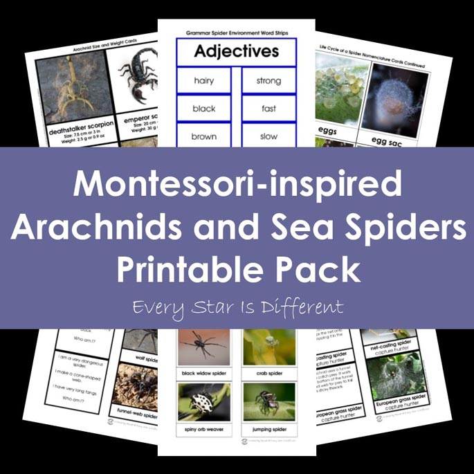 Montessori-Inspired Arachnids and Sea Spiders Printable Pack from Every Star Is Different