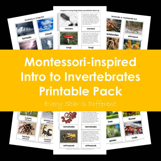 Montessori-Inspired Intro to Invertebrates Printable Pack from Every Star Is Different