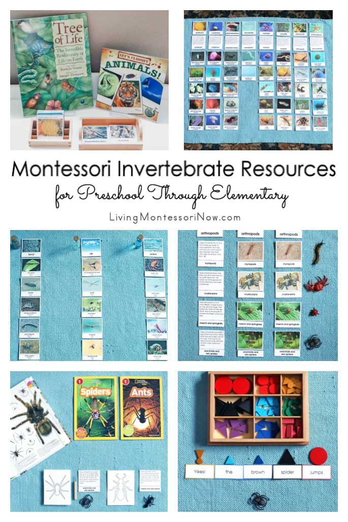 Montessori Invertebrate Resources for Preschool Through Elementary