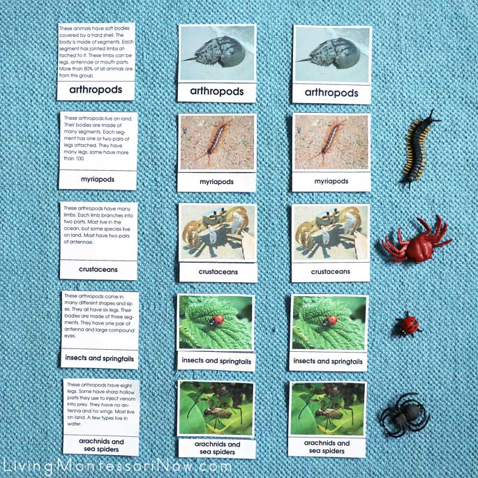 Sorting Types of Arthropods Nomenclature and Description Cards with Safari Ltd Figures